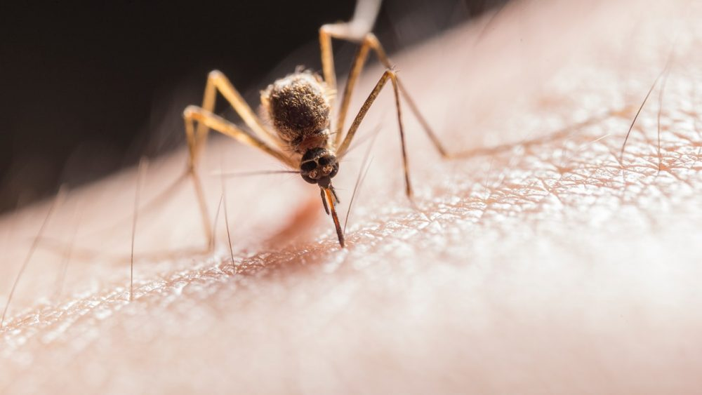 mug steken